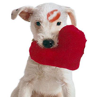 V-day dog